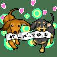 動く可愛い子犬のダックスたち