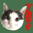 nekosuta.hachiware.cat
