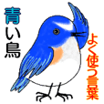 Blue bird : frequently used words