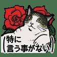 猫のマックス