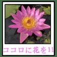 ココロに花を.11