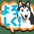 Wanko-Biyori Siberian husky 7