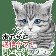 Ayaka Kansaiben soushin cat