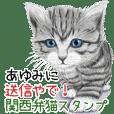 Ayumi Kansaiben soushin cat