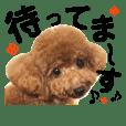 トイプードル日常4(待ち合わせ)デカ文字