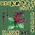 November, birth flowers,flower language.
