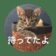 ノリヲんちのネコ01