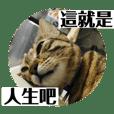 蕨餅貓貓的日常 2