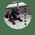 dog_20181010231316