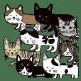 猫一と猫たち