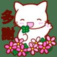★台湾語・中国語★ しらタマ