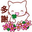 Shiratama (Taiwanese/Chinese)