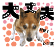animal smile kagawa