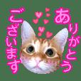 我愛猫。日本版