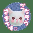 Murasaki&Daryl_20181014164914
