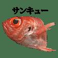 金目鯛 と 言葉