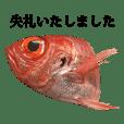 金目鯛 と 敬語