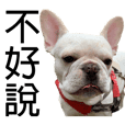 Bata French bulldog 2