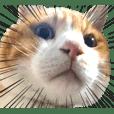 猫のミルトン 実写