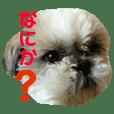 Pretty Shih-tzu Tida sticker