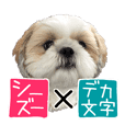 Koume of Shih-tzu 3