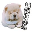 My chow chow notes