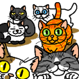 Various pretty cat's3