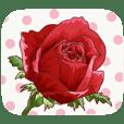 綺麗な花を贈ります 7【感謝挨拶&新年編】