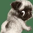 BOKUPUG meets Fawn Pug