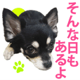 useful chihuahua Sticker no.3