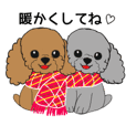 redtoypoodle and greytoypoodle