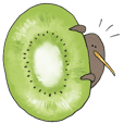 Kiwi fruit and kiwi bird