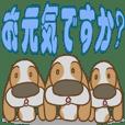 Basset hound 25(dog)