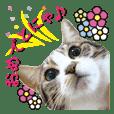 猫のセラちゃん(日常会話編)