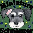 Miniature Schnauzer .