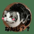 しるたん3 (ほっぺた猫ちゃん)