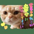ぶさかわネコ チロル2