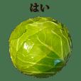 kyabetsu 4