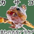 Aqua soul False kelpfish - JP ver.