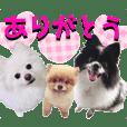 【ジロウと武蔵とヒナ】ヒナ友シリーズ