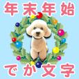 [toy poodle/white] BIG-YEAR/PHOTO