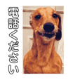 ジョンのスタンプ  わんこ  Mダックス犬