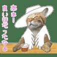 茶トラ猫ガットくん 4
