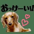 sae_20181112203810
