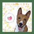 Luffy's stamp