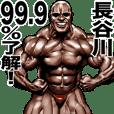 Hasegawa dedicated Muscle macho sticker