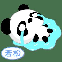 若松専用 Mr.パンダ [ver.1]
