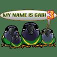 parrot name is Gabi&three birds 3