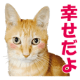 Stickers for people like cats