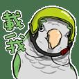 MACHA-Monk parrot